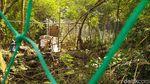 Momen Pelepasan Macan Tutul Si Abah di Gunung Sawal