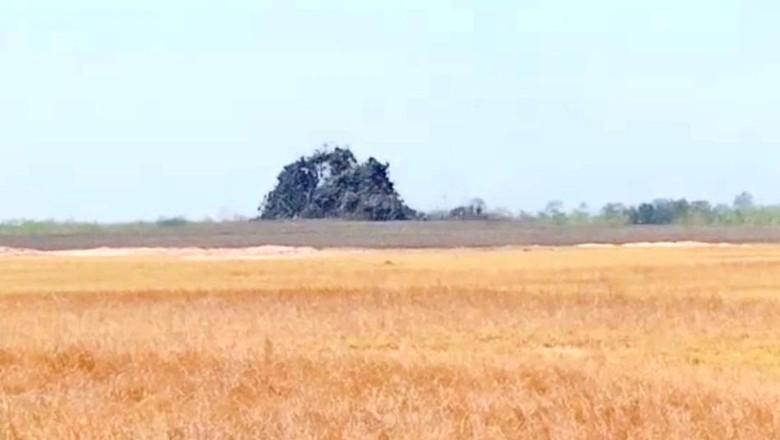 Oro-oro Kesongo