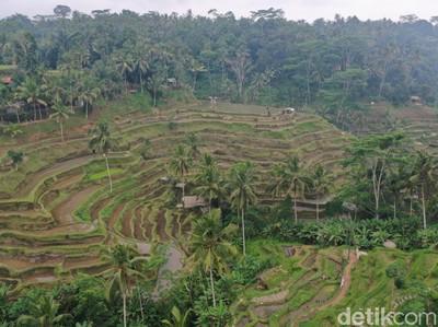 10 Keindahan dan Pemandangan Alam Indonesia yang Memukau