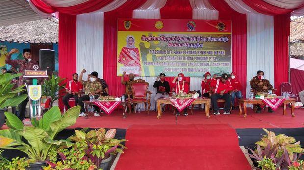 Acara panen yang dihadiri Bupati Klaten Sri Mulyani, Jumat (28/8/2020).