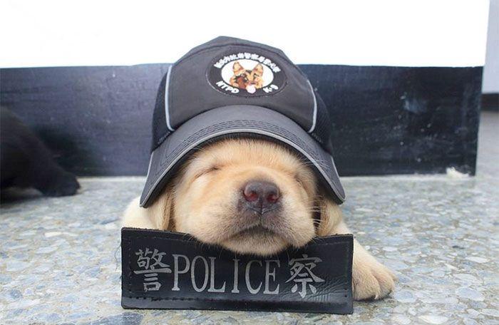 anak anjing polisi