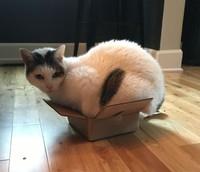 fotoinet kucing tempat kecil