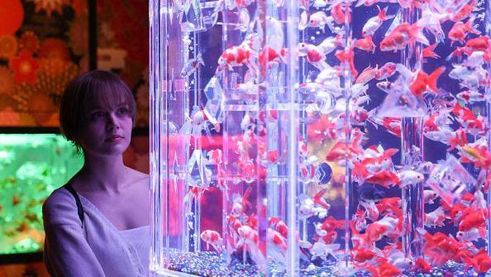 Art Aquarium Museum pamerkan lebih dari 30 ribu ikan mas yang diletakkan di dalam akuarium di Tokyo, Jepang. Warga berdatangan untuk melihat pameran itu.