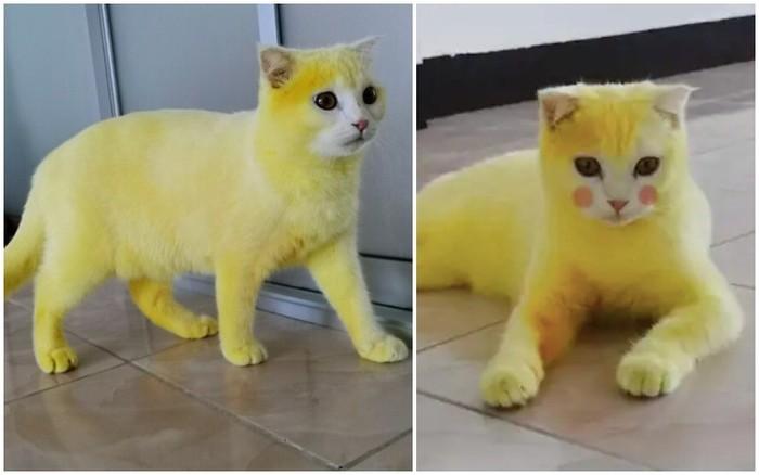 Diolesi Kunyit Kucing Ini Berubah Jadi Pikachu