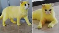 Kocak! Diolesi Kunyit Kucing Ini Berubah Jadi Pikachu