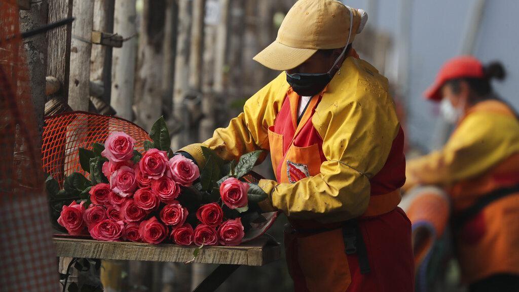 Industri Bunga Ekuador Berjuang Pulih di Tengah Pandemi