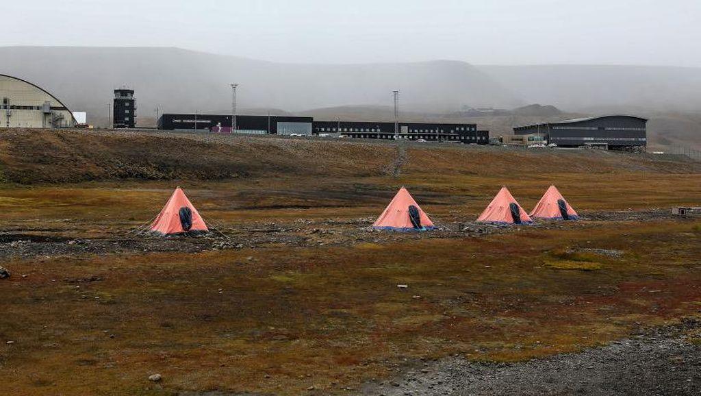 Serangan Beruang Kutub Tewaskan 1 Orang di Lokasi Kemah Ini