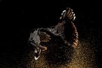 Bird Photographer of the Year 2020