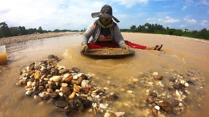 Tak sedikit warga di Sarolangun, Jambi, bekerja jadi penambang emas tradisional. Dalam sehari mereka mampu hasilkan pendapatan rata-rata mencapai Rp 150 ribu.