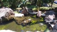 Tenjo Layar punya dua lokasi utama, yang pertama ialah tempat untuk bermain keluarga seperti kolam renang dan kolam terapi ikan. (Bima Bagaskara/detikcom)