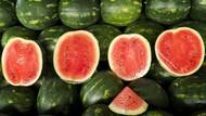 Banyak Semangka Suntik, Kenali Ciri Semangka Masak dan Manis