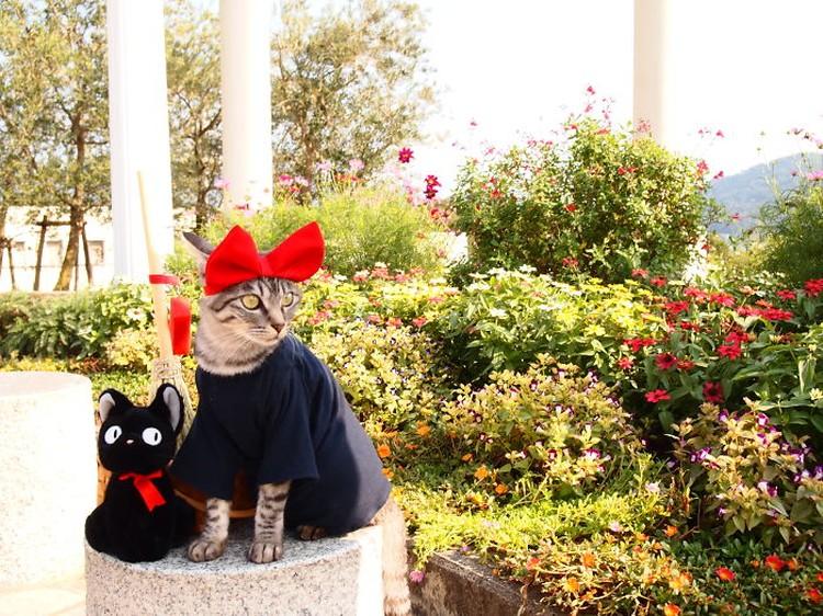 Gemasnya Si Kucing Berpakaian Cosplay Karakter Anime
