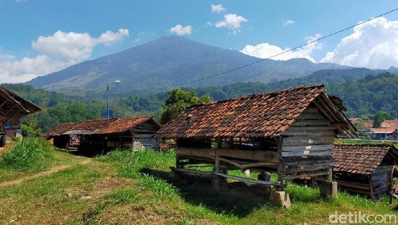 Kampung Domba Desa Wisata Cibuntu