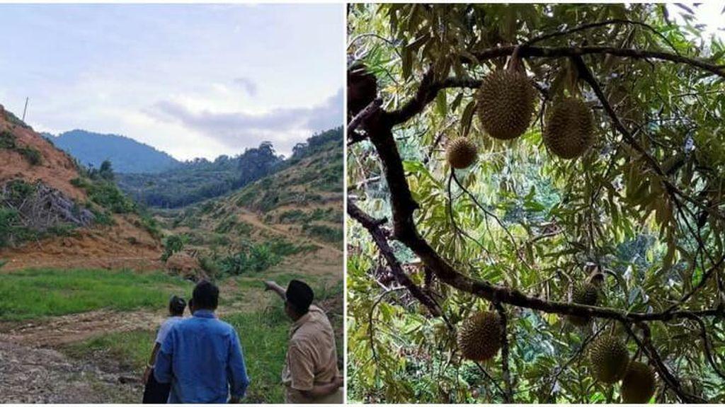 Perkebunan Durian Musang King Hancurkan 1.456 Km2 Habitat Satwa Liar Malaysia