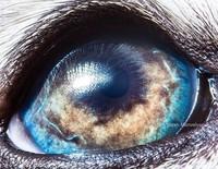 Foto makro mata hewan