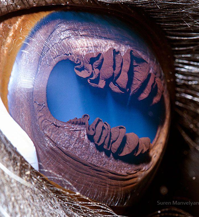 foto mata hewan oleh Suren Manvelyan