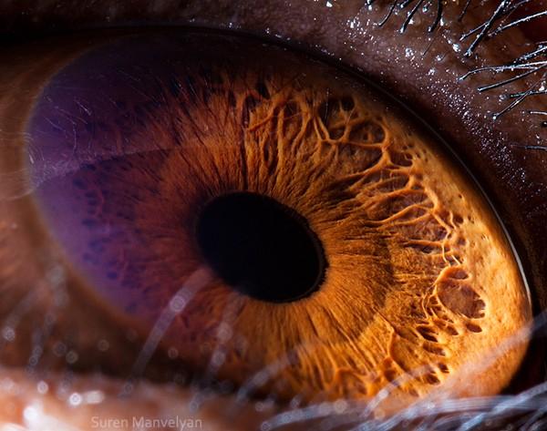 Ini adalah mata dari simpanse. (Suren Manvelyan)