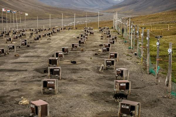 Di lain sisi, hal tersebut pun bisa berubah menjadi penyebar penyakit. Tahun 1920-an, penduduk Longyearbyen menderita flu akibat virus dari jenazah yang dikuburkan. Maka pemerintah setempat dengan tegas menyatakan tidak boleh ada jenazah yang dikuburkan yang sama saja artinya tidak boleh ada kuburan. Getty Images/Maja Hitij