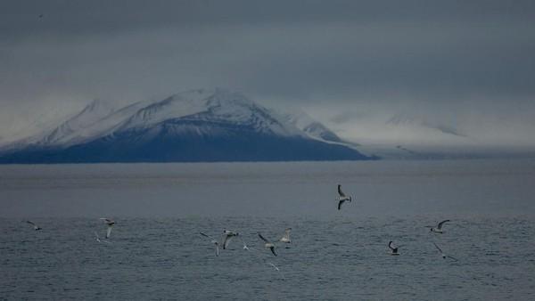 Kepulauan Svalbard pertama kali dijajaki manusia pada abad ke-12, ketika zaman Viking. Bangsa Viking memberi nama Svalbard yang memiliki arti tepi yang dingin. Dan kota utamanya yaitu Longyearbyen merupakan yang paling banyak penduduknya. Getty Images/Maja Hitij