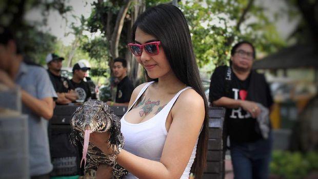 Turis wanita yang pegang testis harimau.