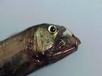 Ikan aneh di dasar lautan