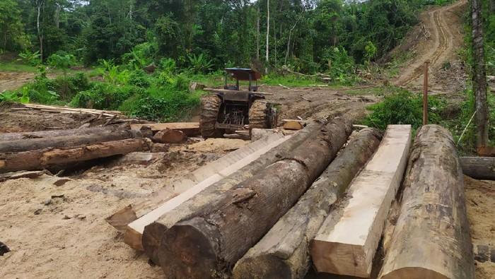 Polisi sita 3,5 ton kayu olahan ilegal di Aceh (dok. Istimewa)