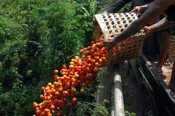 Sayuran dan Ayam Tak Laku, Petani Bagikan Gratis pada Warga