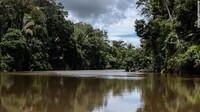 Kebakaran hutan Amazon ini tidak terjadi secara alami. Sebagian besar dikarenakan aksi ilegal untuk membersihkan vegetasi asli dan diganti tanaman pertanian dan peternakan.