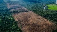 Awapy memimpin tim yang terdiri dari 12 orang berpatroli ke hutan hujan untuk memantau deforestasi dan kebakaran hutan. Pertama kali menggunakan drone, mereka menemukan lahan seluas 1,4 hektar yang telah ditebangi pepohonan.