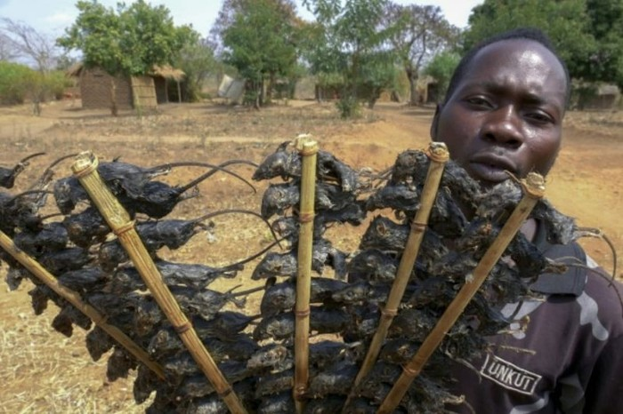 Orang di Afrika Makan Sate Tikus Untuk Atasi Kelaparan