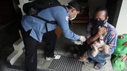 Sejumlah hewan peliharaan seperti anjing dan kucing disuntik vaksin rabies di Gunungketur, Yogyakarta. Begini ekspresi hewan-hewan tersebut saat divaksin.