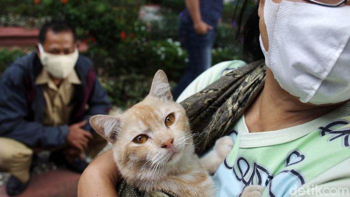 Petugas menyuntikan vaksin rabies secara gratis untuk hewan peliharaan warga di Kelurahan Gunungketur, Yogyakarta, Senin (7/9/2020).
