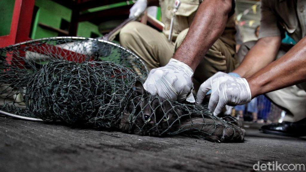7 Warga Digigit Anjing Liar, Hewan di Bengkulu Divaksin Cegah Rabies