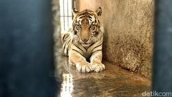 7 Daftar Hewan Langka di Indonesia yang Terancam Punah