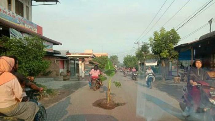 Jalan rusak ditanam pisang di Medan (dok. Istimewa)
