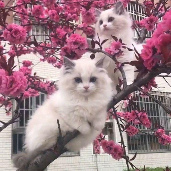 kucing di atas pohon