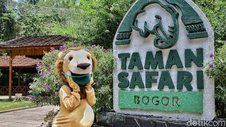 new normal di Taman safari