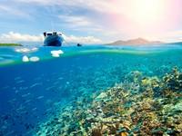 Wisata bahari yang tak kalah cantik ada di Bunaken, Manado, Sulawesi Utara. Kamu yang suka snorkling dan diving harus datang ke sini. (shutterstock)