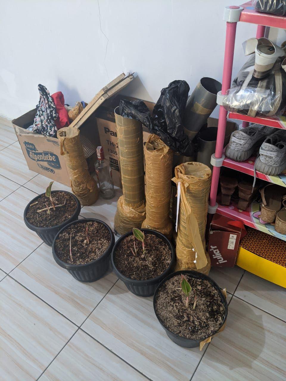Dittipid Siber Bareskrim ringkus penipu jual beli tanaman online