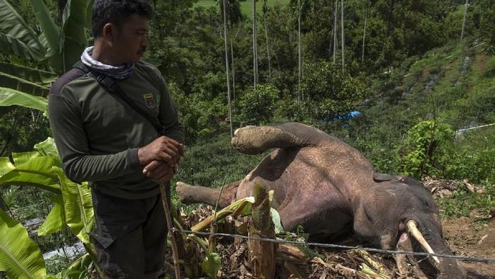 Warga mengamati bangkai Gajah sumatra (Elephas maximus sumatrensis) yang ditemukan mati di kebun milik warga di Desa Tuha Lala, Kecamatan Mila, Kabupaten Pidie, Aceh, Rabu (9/9/2020). Gajah sumatra berjenis kelamin jantan tersebut diduga mati akibat terjerat kawat listrik yang dipasang warga untuk mengusir hewan babi agar tidak merusak tanaman milik warga setempat. ANTARA FOTO/Joni Saputra/Lmo/foc.