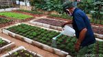 Melihat Kebun Sayuran Eksklusif di Kecamatan Ujungberung