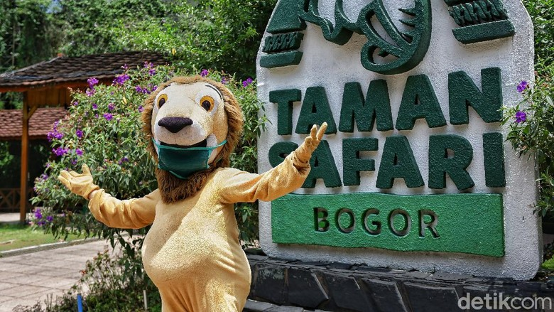 Taman Safari Indonesia telah membuka gerbangnya untuk wisatawan semenjak akhir Juni lalu. Wisatawan mulai ramai dan protokol kesehatan diterapkan di beragam titik.