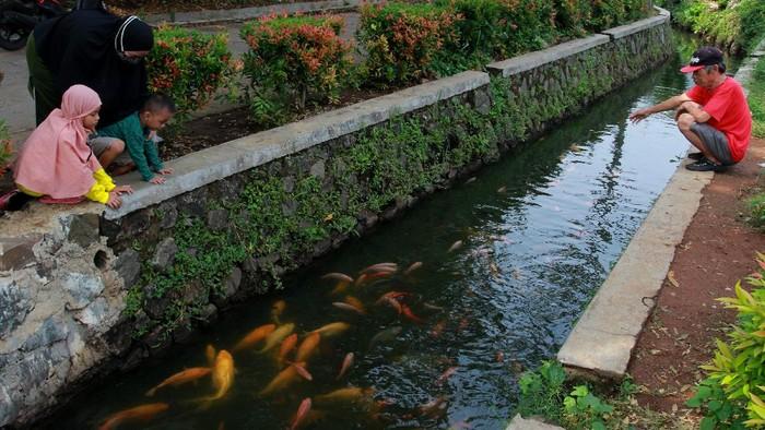 Warga memberi makan ikan yang dipelihara di saluran air di Perumahan Puri Pamulang, Pamulang, Tangerang Selatan, Banten, Jumat (11/9/2020). Warga perumahan memanfaatkan saluran air sepanjang 400 meter untuk membudidayakan ikan mas, mujair dan nila yang hasilnya dijual kepada warga sekitar dengan harga murah, sebagai upaya ketahanan pangan di tengah pandemi COVID-19. ANTARA FOTO/Muhammad Iqbal/pras.