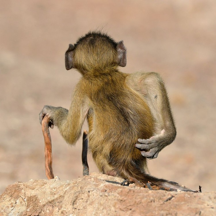Comedy Wildlife Photography Awards 2020
