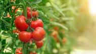 7 Makanan yang Mengandung Kolagen yang Bagus untuk Kulit