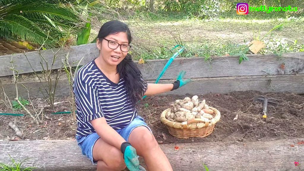 Tinggal di Australia, Emak Indonesia Ini Panen Ubi hingga Daun Singkong