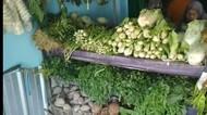 Mahasiswa Ini Sukses Jadi Tukang Sayur dengan Omzet Rp 180 Juta Per Bulan