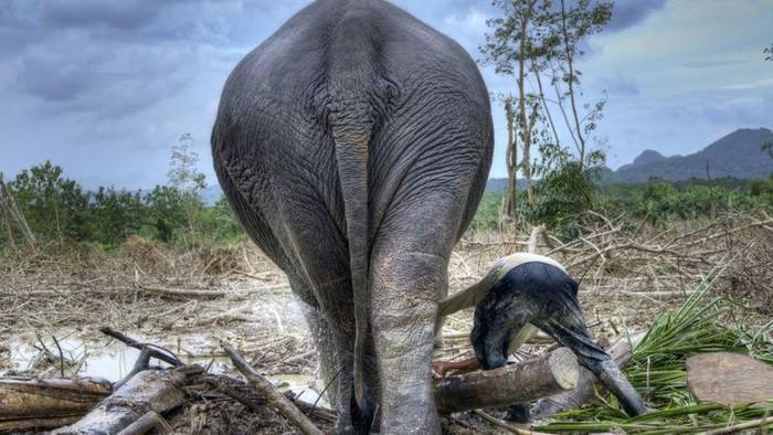 Satwa liar berada di bawah tekanan dari hilangnya habitat, termasuk deforestasi