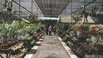 Serunya Belanja Tanaman di Taman Anggrek Ragunan