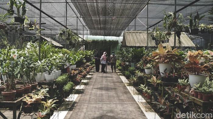 Berburu tanaman hias masih menjadi aktivitas favorit warga di masa Pandemi. Salah satunya di kawasan Taman Anggrek Ragunan, Jakarta yang selalu ramai.